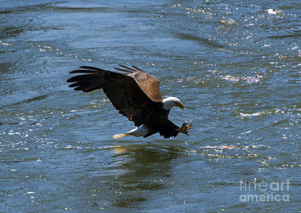Fish Eagle Photograph - Poised To Catch by Mike  Dawson