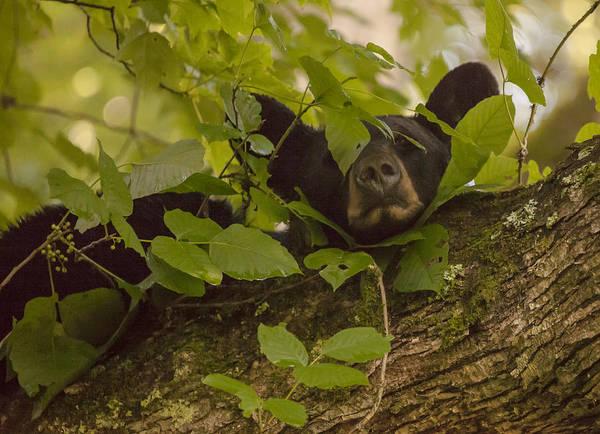 Photograph - Poison Ivy Pillow by Doug McPherson