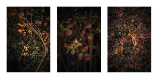 Photograph - Poison Oak Collage by Alexander Kunz