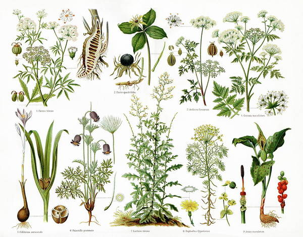 Wall Art - Photograph - Poisonous Plants by Cordelia Molloy/science Photo Library