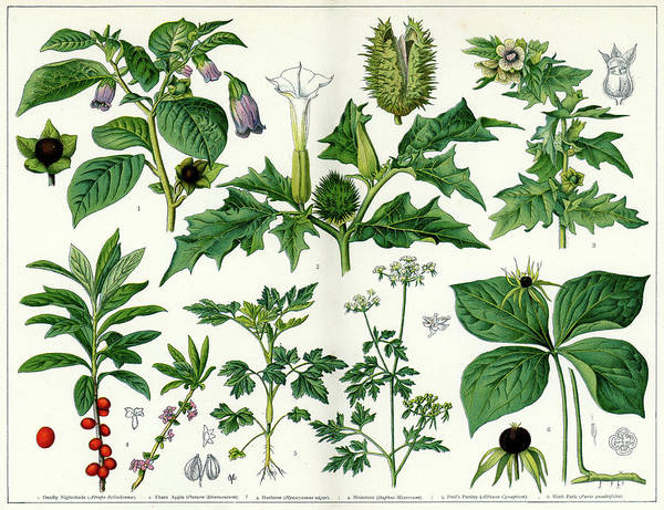 Style Digital Art - Poisonous Plants by Duncan1890