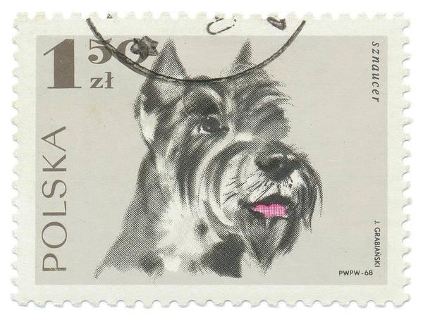 Poland Painting - Poland Stamp I On White by Wild Apple Portfolio