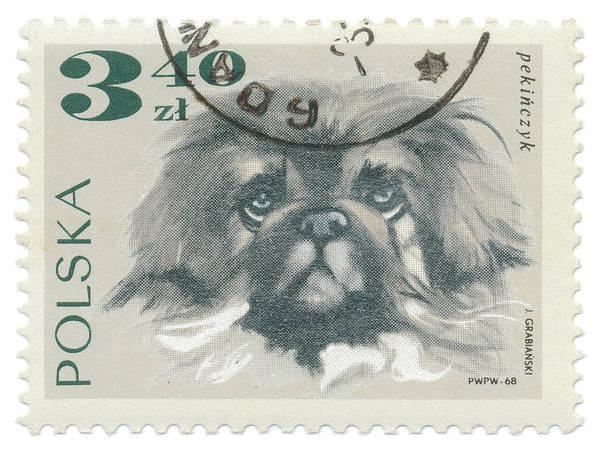 Poland Painting - Poland Stamp IIi On White by Wild Apple Portfolio