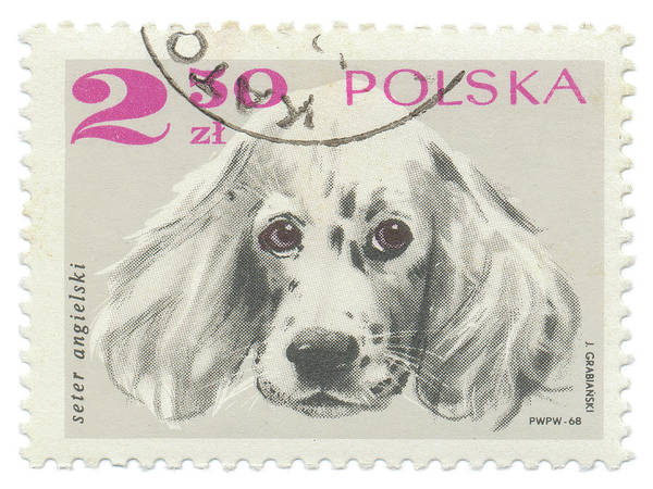 Poland Painting - Poland Stamp Iv On White by Wild Apple Portfolio