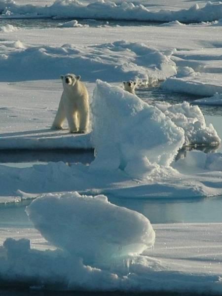 Elliott Digital Art - Polar Bear And Cub by Kelley Elliott