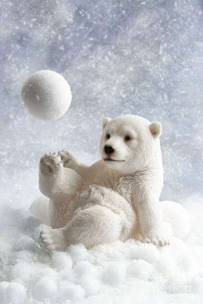 Polar Bear Photograph - Polar Bear Decoration by Amanda Elwell