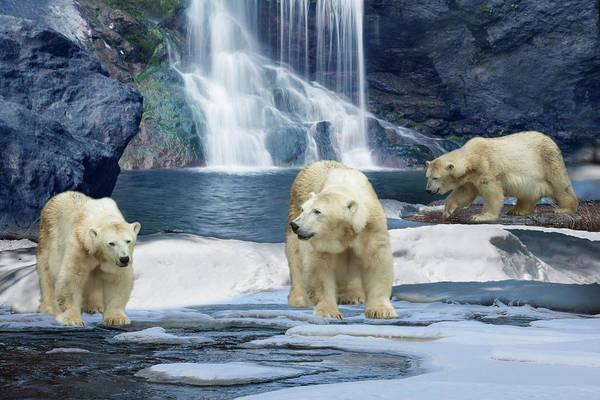 Polar Bear Drawing - Polar Bear Winter by MGL Meiklejohn Graphics Licensing