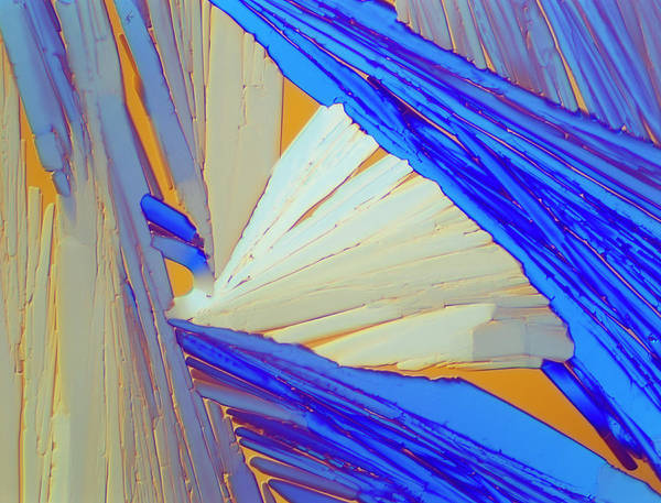 Wall Art - Photograph - Polarised Lm Of Acenaphthene Crystals by Sinclair Stammers