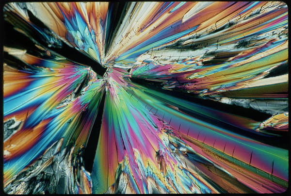 Photograph - Polarised Lm Of Crystals Of Sugar by Claude Nuridsany & Marie Perennou/science Photo Library