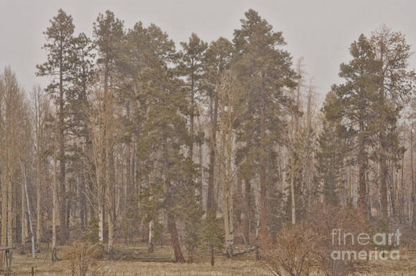 Photograph - Pole Knoll by Donna Greene