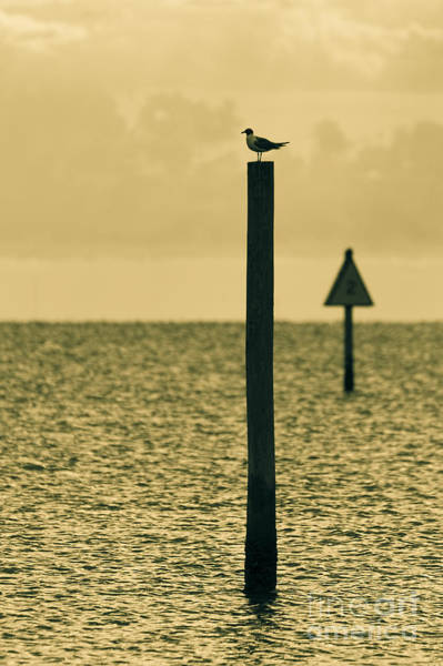 Shipping Photograph - Pole Position by Marvin Spates