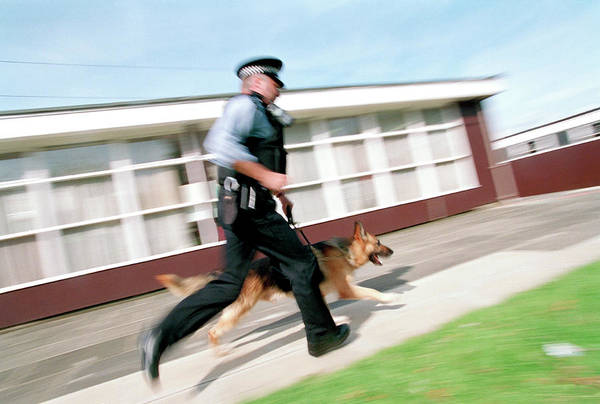 Service Dog Photograph - Police Dog Chase by Jim Varney/science Photo Library
