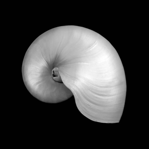 Photograph - Polished Nautilus Shell by Jim Hughes