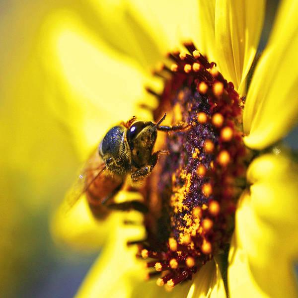 Honey Photograph - Pollinating by Gilbert Artiaga