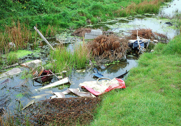 Litter Photograph - Polluted Stream by Robert Brook/science Photo Library