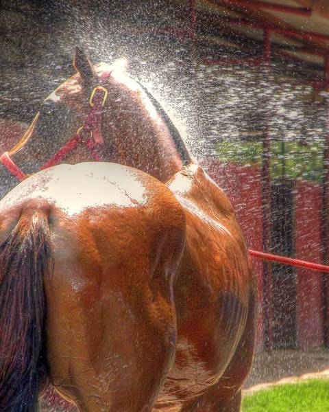 Photograph - Polo Pony Shower Hdr 21061 by Jerry Sodorff
