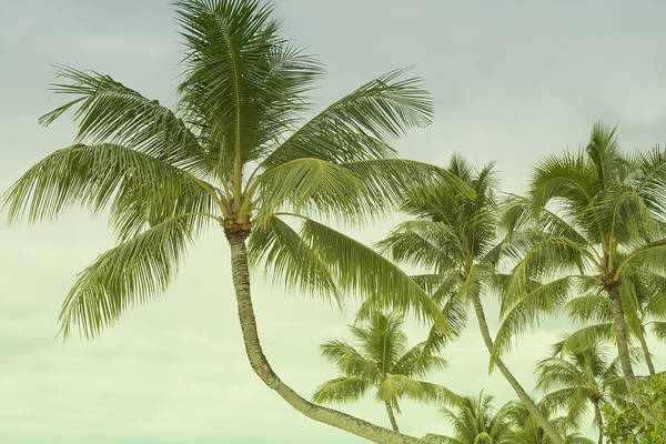 Photograph - Polynesia Palm Trees by Gigi Ebert