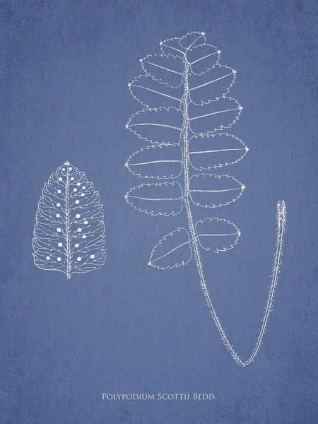 Ferns Digital Art - Polypodium Scottii by Aged Pixel