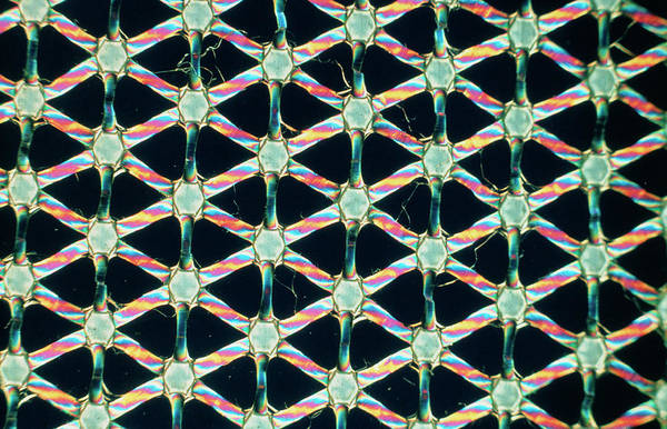 Microscopic Photograph - Polythene Net by Dr Harold Rose/science Photo Library