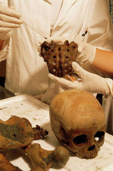 Wall Art - Photograph - Pompeii Skull Being Sampled In A Lab by Pasquale Sorrentino/science Photo Library