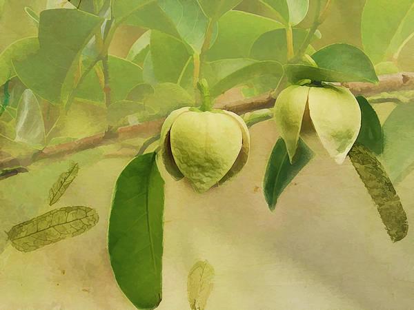 Photograph - Pond Apple by Grace Dillon