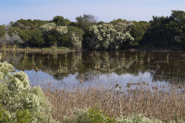 Photograph - Pond At Huntington Beach State Park 2 by MM Anderson