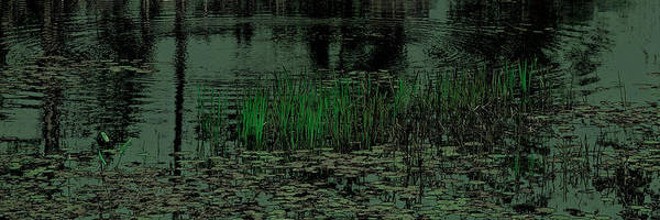 Photograph - Pond Grasses Panorama by David Patterson