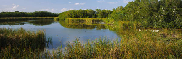 Everglades National Park Photograph - Pond In A Forest, Eco Pond, Flamingo by Panoramic Images