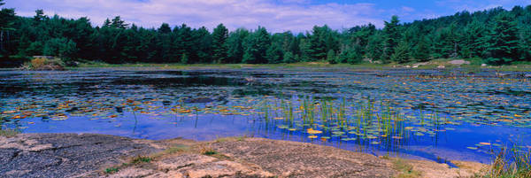Mount Desert Island Photograph - Pond In A National Park, Bubble Pond by Panoramic Images