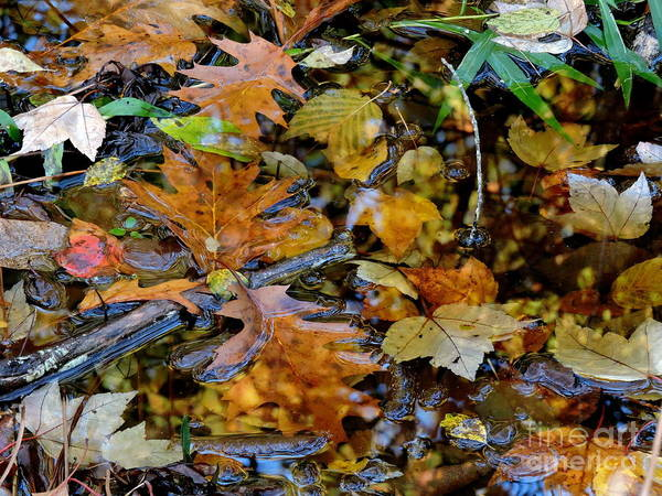 Photograph - Pond Of Color by Marcia Lee Jones