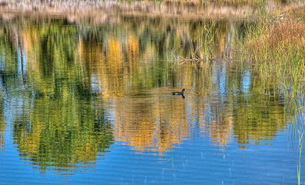 Photograph - Pond Reflection by Britt Runyon