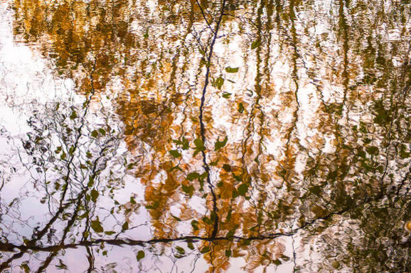 Photograph - Pond Reflections #3 by Crystal Hoeveler