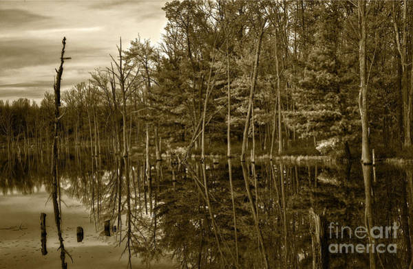 Photograph - Pond Reflections by Debra Fedchin