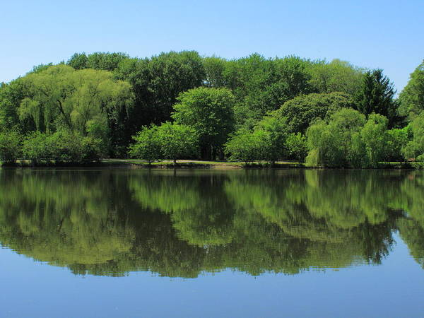 Photograph - Pond Reflections by Frank Romeo