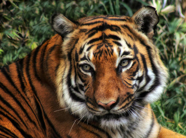 Photograph - Life At The Zoo by Elaine Malott