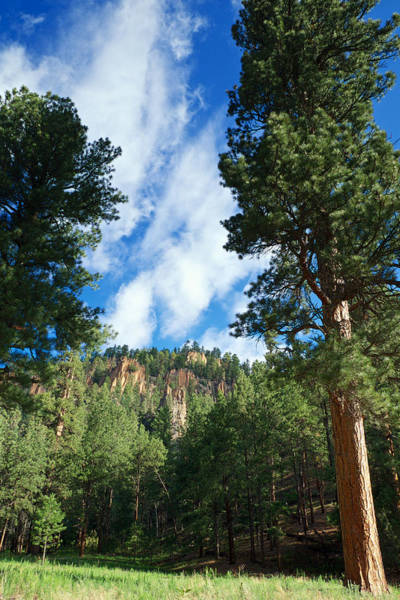 Photograph - Ponderosa And Cliffs In The Jemez Mountains New Mexico by Mary Lee Dereske