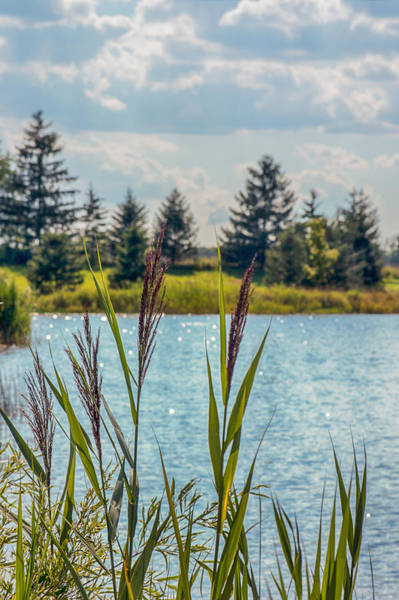 Photograph - Pond's Edge by Garvin Hunter
