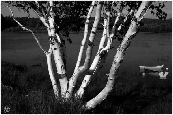 Photograph - Pontook Birch And Rowboats Monochrome by Wayne King