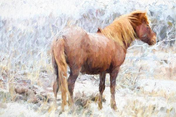 Photograph - Pony In The Barrens by Alice Gipson