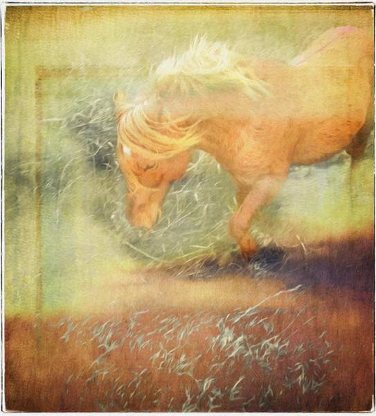 Photograph - Pony In The Grasses by Alice Gipson