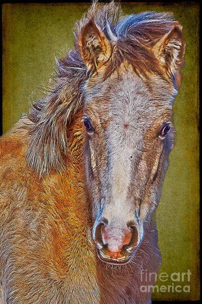 Photograph - Pony Portrait  by Charles Muhle