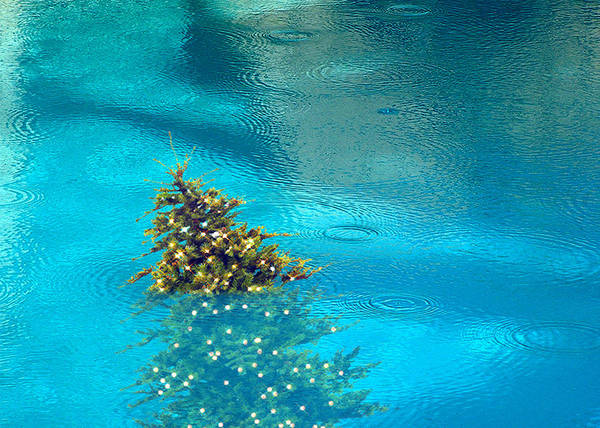 Rancho Mirage Digital Art - Pool With Tree by Stan  Magnan