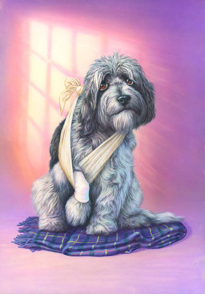 Andrew Farley Photograph - Poorly Paw by MGL Meiklejohn Graphics Licensing