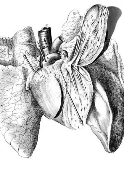 Wall Art - Photograph - Pop-up Human Heart From Descartes' Book De Homine by George Bernard/science Photo Library