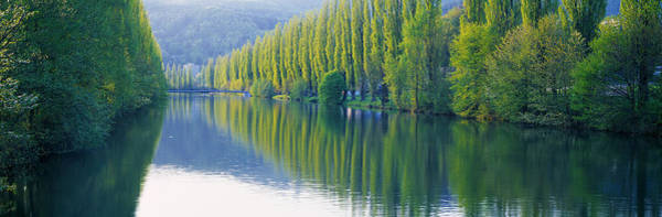 Thicket Photograph - Poplar Trees On River Aare, Near Canton by Panoramic Images