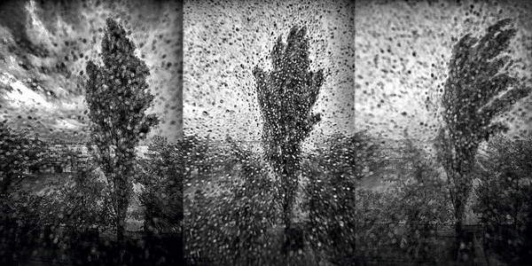 Poplars In The Storm Art Print