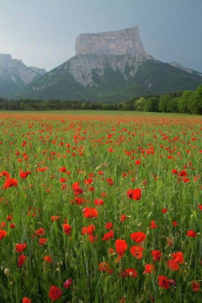 Wall Art - Photograph - Poppies And Mont Aiguille by Bob Gibbons/science Photo Library