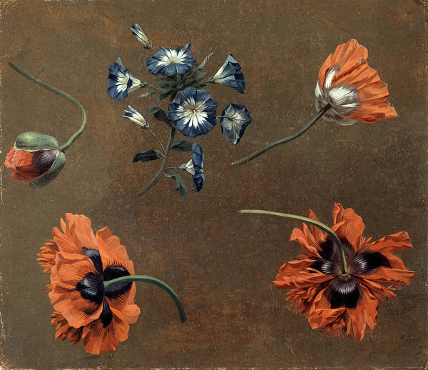 Wall Art - Painting - Poppies And Tradascanthus, Unknown Artist by Litz Collection