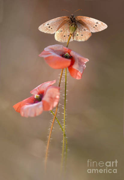 Wall Art - Photograph - Poppies by Jaroslaw Blaminsky