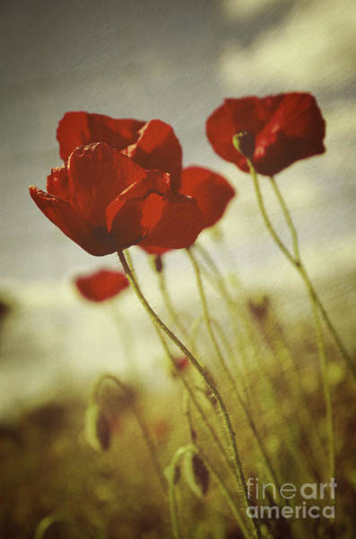 Appealing Wall Art - Photograph - Poppies by Carlos Caetano